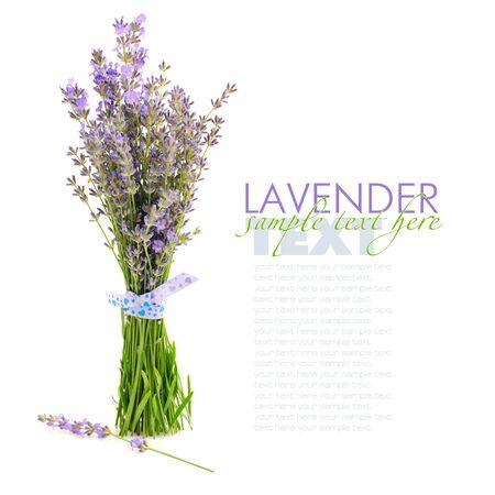lavandula: Lavender flowers (Lavandula) isolated on white background