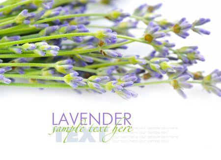 lavandula: Lavender flowers (Lavandula) on a white background Stock Photo