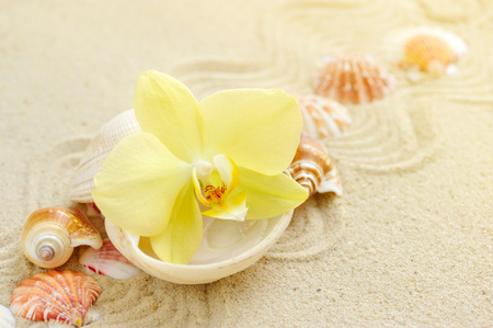 Orchid and seashells on sandy beach