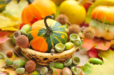 vegetable background: Mini decorative pumpkin with acorns on autumn leaves