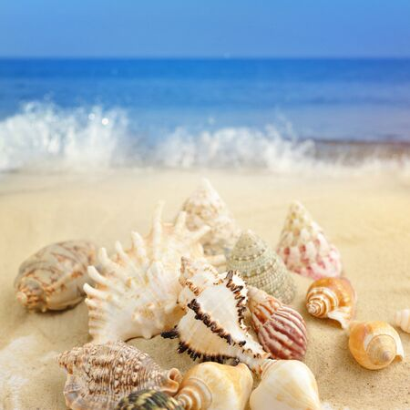Sea shells on sandy beach Stock Photo