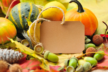 acorn seed: Blank paper sticker with autumn acorns and leaves Stock Photo