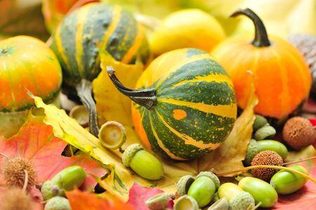 fruits background: Mini decorative pumpkins with acorns on autumn leaves