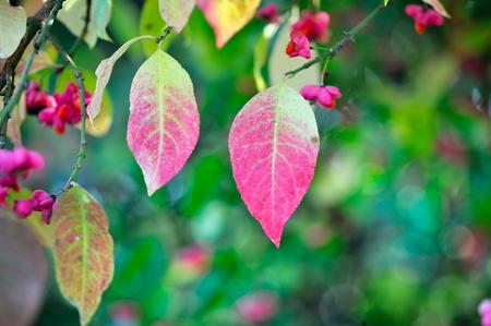Baumwolljersey otoño los árboles hojas bellotas gris verde tonos 1,5m ancho