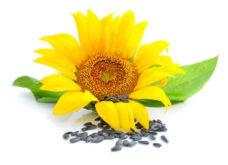 Gele zonnebloem en zonnebloemzaden op een witte achtergrond