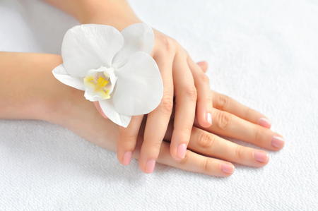 manicured hands: Beautiful woman hands with white orchid flower Stock Photo
