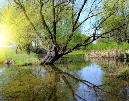 remarkable: The remarkable landscape is with a lake and old willow