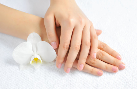 Beautiful woman hands with white orchid flower Standard-Bild
