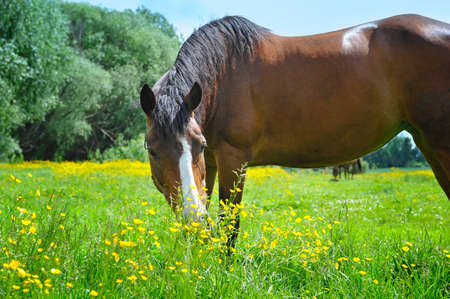 beast ranch: Horse on a pasture Stock Photo