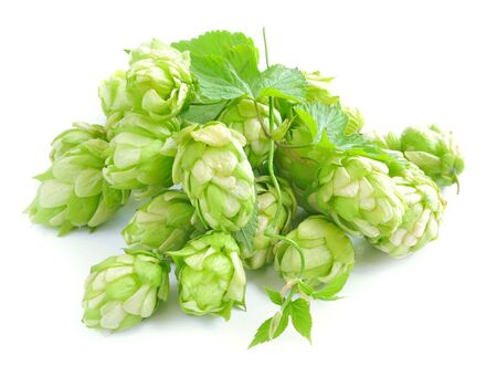 beer garden: Small group of cones of hop with sheets (Humulus lupulus) on a white background Stock Photo