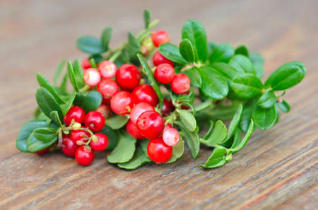 mountain cranberry: Berries of wild cowberry (Vaccinium vitis-idaea) are on a wooden background