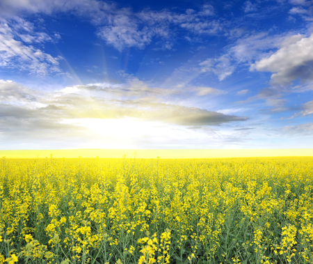 rappi: Field of rapeseed with beautiful clouds - plant for green energy