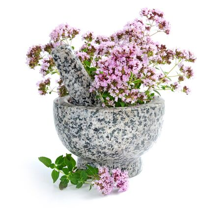 origanum: Bunch of fresh oregano (Origanum vulgare) in a marble mortar with pestle on a white background