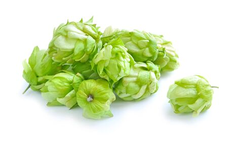 humulus: Small group of cones of hop (Humulus lupulus) on a white background
