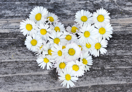 wooden surface: Daisy love symbol on old wooden background