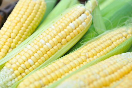 mais: Fresh corn cobs, close-up Stock Photo