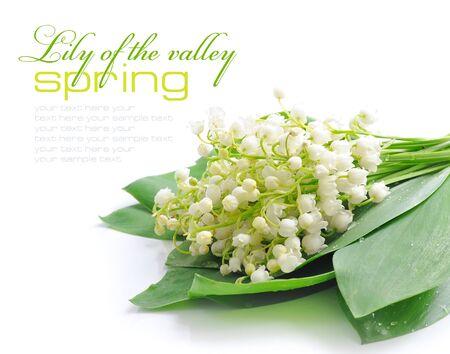 majalis: Lily of the valley (Convallaria majalis) Stock Photo