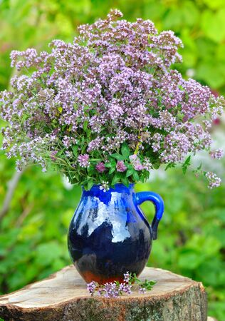 origanum: Beautiful bouquet of fresh oregano (Origanum vulgare) outdoors