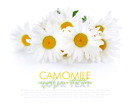 green and white: Chamomile flowers on a white background with space for text Stock Photo