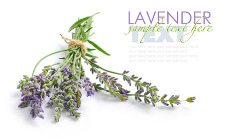 lavandula: Bunch of lavender flowers (Lavandula spica) on a white background
