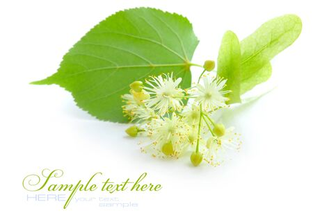 linden tea: Flowers of linden tree on a white background Stock Photo