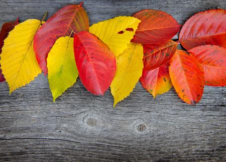 hojas secas: Hojas de otoño sobre fondo de madera vieja