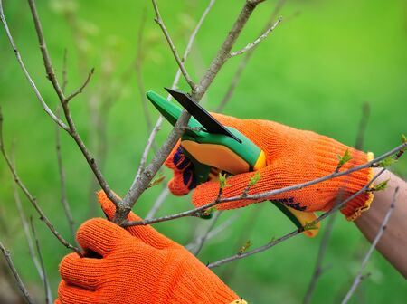 Hands with gloves of gardener doing maintenance work, pruning the tree Banque d'images