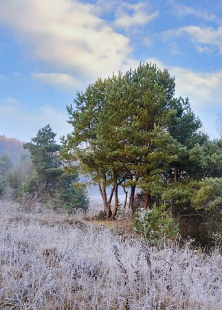 Frosted autumn meadow