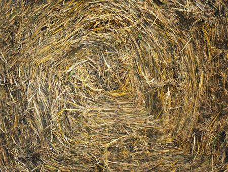 hayrick: Straw texture background
