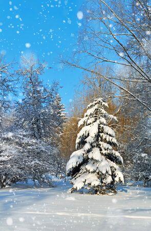 wintery day: Beautiful winter landscape