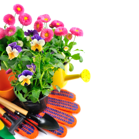 floristics: Gardening tools and spring flowers on a white background