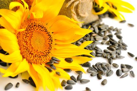 Gele zonnebloemen en zonnebloemzaden op een witte achtergrond Stockfoto
