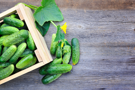 Fresh cucumbers in wooden box on the wooden table