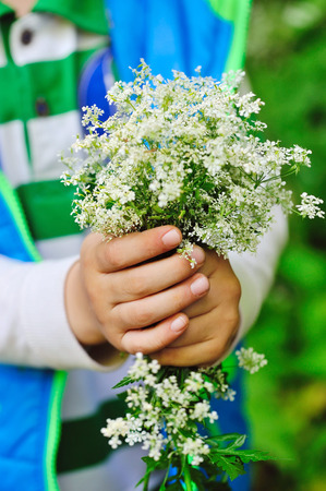 Bouquet of wild white flowers in the hands of a child Stock Photo