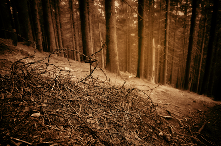 echoes: Old barbed wire in the spruce forest. Echoes of War. Art photo in sepia.