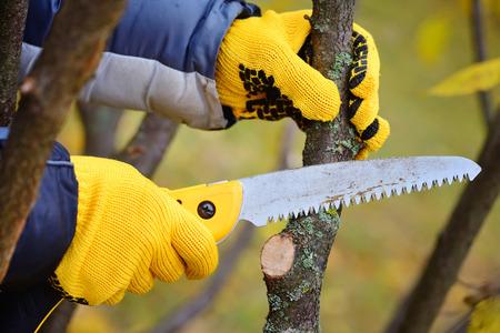 Handen met handschoenen tuinman doet onderhoud, snoeien van bomen in de herfst