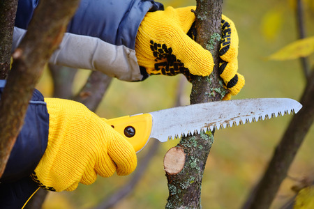 Hands with gloves of gardener doing maintenance work, pruning trees in autumn Zdjęcie Seryjne - 65645937