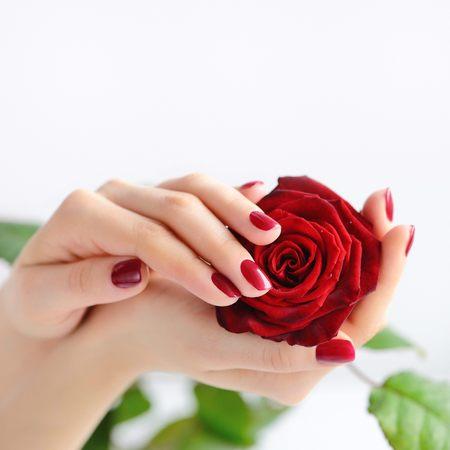 Ręce kobiety z ciemnoczerwonym manicure z czerwoną różą na białym tle