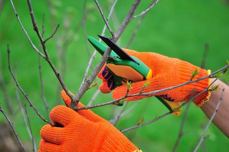 Handen met handschoenen van tuinman die het onderhoudswerk doen, snoeiend de boom