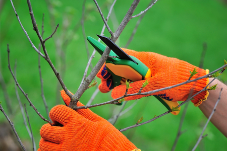 Hands with gloves of gardener doing maintenance work, pruning the tree Stok Fotoğraf