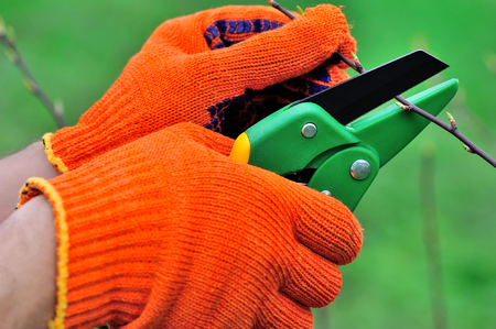 Hands with gloves of gardener doing maintenance work, pruning the tree Stock Photo