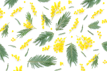 Mimosa flowers and leaves on white background. Top view. Stock Photo