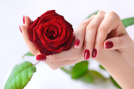 Hands of a woman with red manicure with red rose on white background