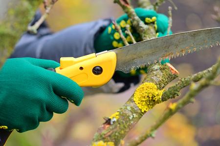 Mains avec des gants de jardinier effectuant des travaux de maintenance, élagage des arbres en automne Banque d'images
