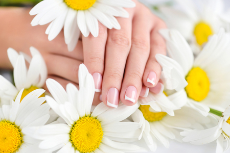 Hands of a woman with beautiful french manicure and white daisy flowers