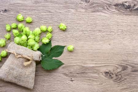 Fresh hop cones (Humulus) in bag with leaf on wooden background. Top view