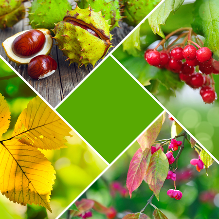 Autumn creative collage of photos. Autumn concept with a central main color