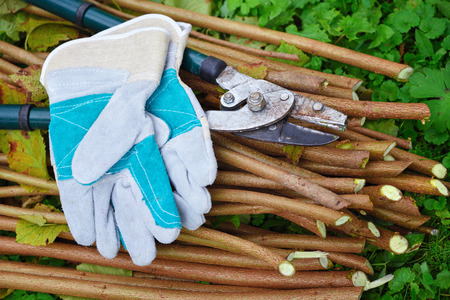 Garden gloves with old garden secateur for working in the garden