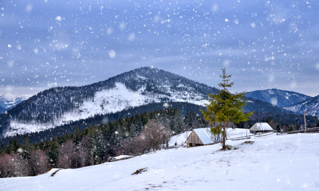 Beautiful mountain landscape. Winter landscape with falling snow. Location Carpathian, Ukraine, Europe