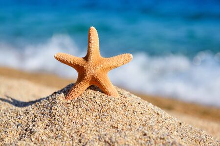 A starfish on the beach against the background of the sea and waves on a hot sunny day
